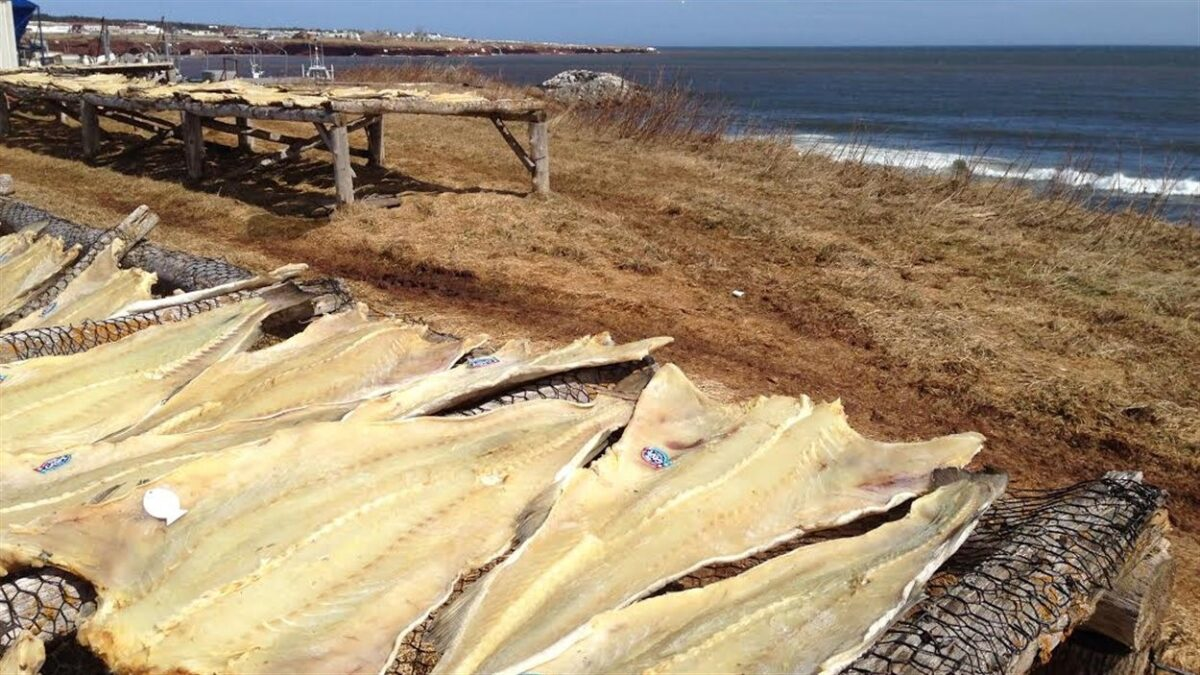 Salted cod drying according to tradition